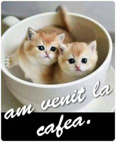 Good Morning, Coffee Cups, Comics, Buen Dia, Coffee Mugs, Bonjour, Coffee Cup, Cartoons, Comic