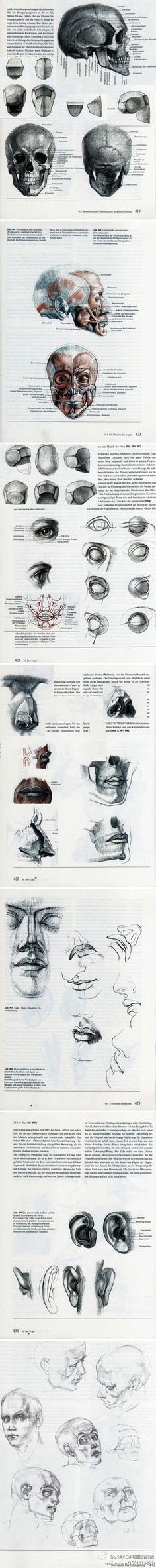 人体结构图解