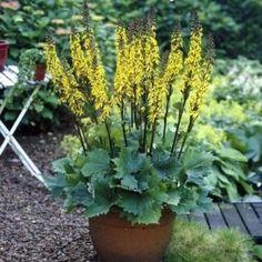 Shade Garden, Perennials, Garden Tools, Backyard, Plants, Middle, Medium, Lawn And Garden, Patio