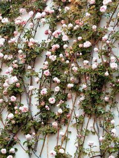 if the venue doesn't have climbing roses on walls - I would recreate this look for the event