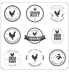 Set of premium chicken meat and eggs labels vector