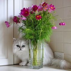 Camouflage #cat