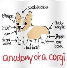 Anatomy of a Corgi Posters