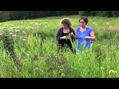 11 plantes extraordinaires dans 4 mètres carrésFloraMedicina œuvre dans la formation d'herboriste-clinicien depuis 1999 au Québec et est fière de graduer cette année 25 nouveaux praticiens.  www.floramedicina.com