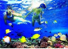 west maui coral gardens snorkel