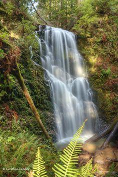 Berry Creek Falls, Big Basin Redwoods State Park