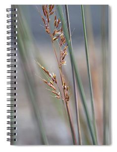 September Grasses Spiral Notebook featuring the photograph In The Company Of Blue 2 by Julie Weber