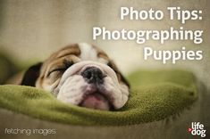 How to Photograph Puppies - Photography Tutorial at LIFE & DOG.