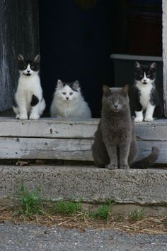 "the wild bunch... """
