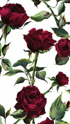 Rosas ❤❤