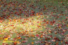 Herbstlicher Tiergarten