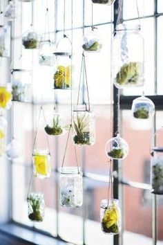 Hanging Glass Jar Window