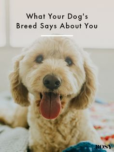 Check Out These Expert Dog Training Tips! – Pets, Dogs, Cats Caring Tips and Pictures Dog Training Treats, Dog Training Books, Agility Training For Dogs, Training Your Dog, Training Tips, Training Collar, Training Classes, Dog Agility, Training Equipment