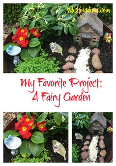 Trendy and so adorable, fairy gardens enable you to personalize a sweet little landscape that you can use continuously throughout the year or redo for Spring!  This is a sweet and cute project for adults or children!