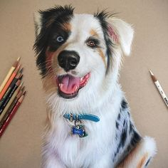 "Pencil Drawing Tutorials Colored pencil ""Loki"" on Behance - Colored Pencil Artwork, Color Pencil Art, Colored Pencils, Pencil Drawing Tutorials, Pencil Sketching, Drawing Tips, Drawing Ideas, Caran D'ache, Dog Paintings"