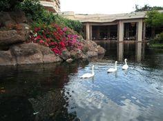 Hyatt Regency Maui Resort and Spa: Swan Court for breakfast & dinner