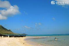 海の冒険家プロデュース『石垣島シーカヤック1日ツアー』でのワンシーン。  のどかな島の景色に、突然現れた石垣牛の群れに思わずシャッターチャンス!!
