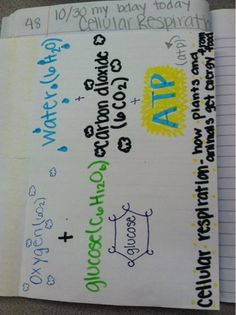 Mrs. Cowan's Science Journal: Page 48: Cellular Respiration Foldable