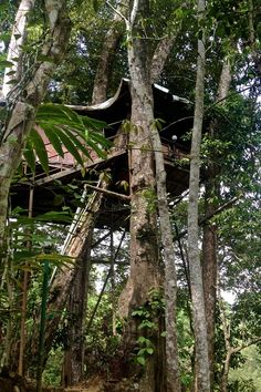 One travel writer stayed in a tree house in Kerala, India. Read about her #trip to #India on our #travel blog: http://www.georama.com/blog/kerala-india-from-a-tree-house/