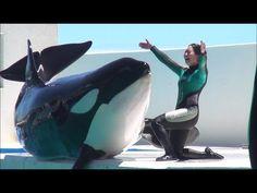 夏シャチ2016 at 鴨シー - 2016.7.30 - YouTube Orcas, World Discovery, Art Drawings For Kids, Sea World, Dolphins, Whale, Youtube, Animals, Beautiful