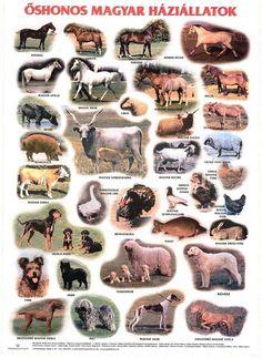 ... Farm Animals, Hungary, Classroom, History, School, Travel, Life, Decor, Living Alone