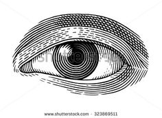 Vector illustration of human eye in engraved style