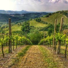 La Grotta vineyard in Cesena, Italy I @Satu VW (todestinationunknown.com) I Destination Unknown