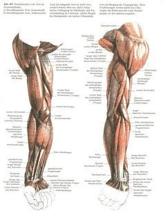 Trying to improve your art by studying anatomy? Having trouble finding good references? Maybe you...