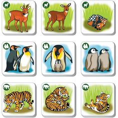 Animal Activities, Teaching Activities, File Folder Activities, Forest Theme, Animal Habitats, Jungle Party, Animals For Kids, Kids Gifts, Autism