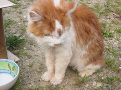 Lucy HagartheHorrible Pulver‎CT Lost Pets 3 hrs ·     CAT ORANGE/WHITE  SKIN AND BONES  NOT SURE HE OR SHE WILL EAT OR DRINK FOUND ON MUSIC MOUNTAIN, FALLS VILLAGE SEE POST ON MY PAGE TO TO LEAVE MESSAGES https://www.facebook.com/groups/330978610254210/permalink/1030322746986456/