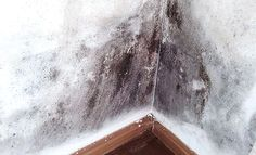 schimmel im badezimmer schimmel entfernen pinterest schimmel schimmel entfernen und. Black Bedroom Furniture Sets. Home Design Ideas