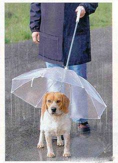 Things To Help When Walking Your Dog In The Rain Snoozer Pet Umbrella keeps your pet dry and comfortable in rain, sleet or snow. Clear umbrella body gives you full view of your pet. The fabric of the dog umbrella is waterproof. I Love Dogs, Puppy Love, Cute Dogs, Funny Dogs, Dog Umbrella, Clear Umbrella, Dog Leash, Mans Best Friend, Dog Life