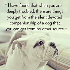 Companionship that is truly nonjudgemental.