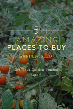 5 Amazing Places To Buy Garden Seed
