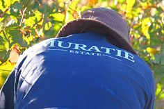 Buy wine at Muratie. Join our wine club to enjoy members discounts, exclusive events and private promotions. Farm Life, Harvest, Clock, Wine, Stuff To Buy, Watch, Clocks, The Hours