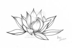 pictures of lotus tattoo drawings | Lotus Flower by alexdicko on deviantART