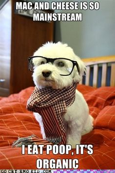hipster puppy, so good to know the reason why I have to constant stop Juju from eating other dog's poop
