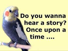 Cockatiel Cockateil Pet Bird Birds Sing Singing Talk Talking Noises Funny Pets Animal Videos Jazevox -  #bird #birds  #birding #animale #bird_watchers_daily #animal #birdwatching #pets #nature_seekers #birdlovers JAZEVOX Products For Sale at ://astore.amazon.com/store-jazevo… Tidy Seed No-Mess Bird Feeder ://amzn.to/2bgVlWa Vktech® Pet Bird Parrot Parakeet Budgie Cockatiel Cage Hammock ... - #Birds