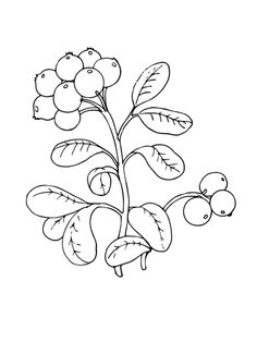 Lingonberry or Cowberry coloring page from Berries category. Select from 20966 printable crafts of cartoons, nature, animals, Bible and many more.