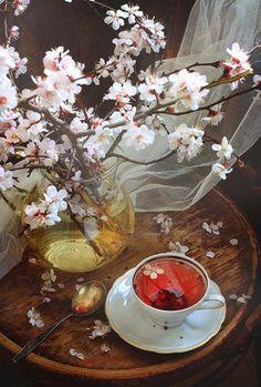 cherry blossom tea time