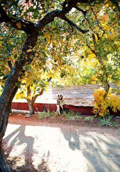 12 Best Oak Glen/Redlands photography images | Engagement pics