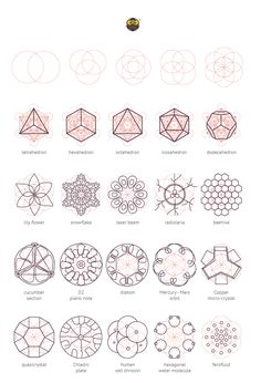 visualizingmath:  geometrymatters:  Geometry Matters: Various nature elements that abide by geometric laws and construction patterns. © Geometrymatters,2014  Reblogged for the Visualizing Math followers that are fans of Sacred Geometry.