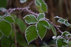 Is it winter or not? Winter Wonderland, Plant Leaves, Sky, Plants, Heaven, Heavens, Plant, Planets
