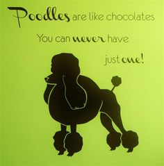 Poodles are like chocolates. You can never have just one! I think poodles prefer to be at least in a pair.