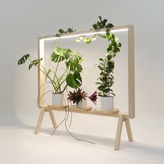 johan kauppi launches illuminated frame for potted plants at stockholm furniture fair 2018