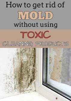 How to get rid of mold without using toxic cleaning products - CleaningInstructor.com
