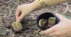 Don't throw away your tea bags. Here are 10 reasons why you should plant them instead