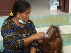"IAR celebrates World Wildlife Day with news of latest orangutan rescue - ""Anjas"" | International Animal Rescue"