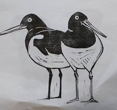 Oystercatcher test print... This is just the begining for these I intent to create some collage or abstract backgrounds for them...but also quite like the simplicity of black & white ...