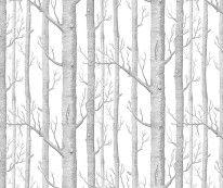 Fototapeta Salon 17 - Brzozy szare , grafitowe , na białym tle , drzewa ,ryciny , rysunki
